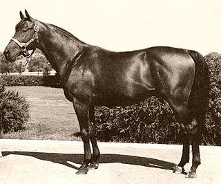 Citation (horse) American-bred Thoroughbred racehorse