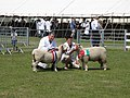 Class winners at the Lincolnshire Show - geograph.org.uk - 1372735.jpg