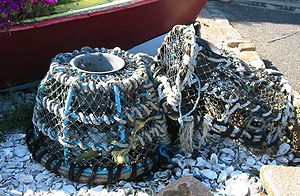 Lobster trap - Lobster pots in Jersey