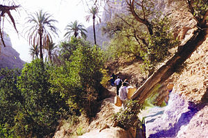 Moroccan citron - Berber peasants climbing up the steep mountain at the way to their orchards.