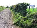 Clintagh Lane - geograph.org.uk - 802312.jpg