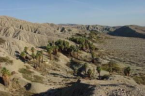 Deserts of California - Coachella Valley Preserve, in the Colorado Desert