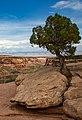 Colorado National Monument (0d3af22a-47ef-41e8-a118-6e86cb061d61).jpg