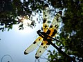 Colorful Transparent wings.jpg