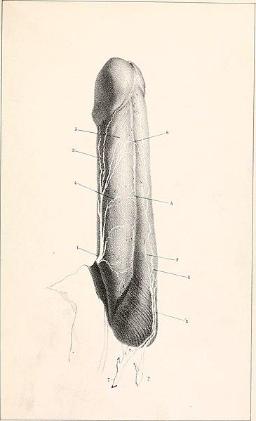 File:Comptes rendus des séances de la Société de Biologie et de ses filiales .. (1853 - 1854) (20485380380).jpg