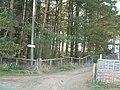 Conifer plantation - geograph.org.uk - 154002.jpg