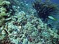 Coral scene 17 (7342810340).jpg