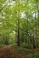 Cotthembos, Vallei van de Cotthembeek 10.jpg
