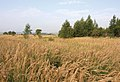 Countryside - Vladimir Region, Russia - panoramio.jpg