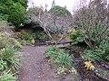 Crichton Royal Hospital Grotto ponds, Dumfries, Scotland.jpg