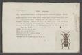 Crioceris - Print - Iconographia Zoologica - Special Collections University of Amsterdam - UBAINV0274 035 03 0010.tif