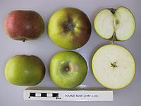 Cross section of Double Rose, National Fruit Collection (acc. 1947-119).jpg