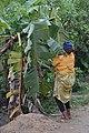 Cultivatrice camerounaise4.jpg