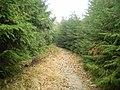 Czerwony szlak na Skałkę - panoramio.jpg