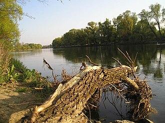 Devínska Nová Ves - Image: DNV Morava river