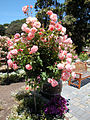DSC28056, Chateau Julien Winery, Carmel, California, USA (4449597654).jpg