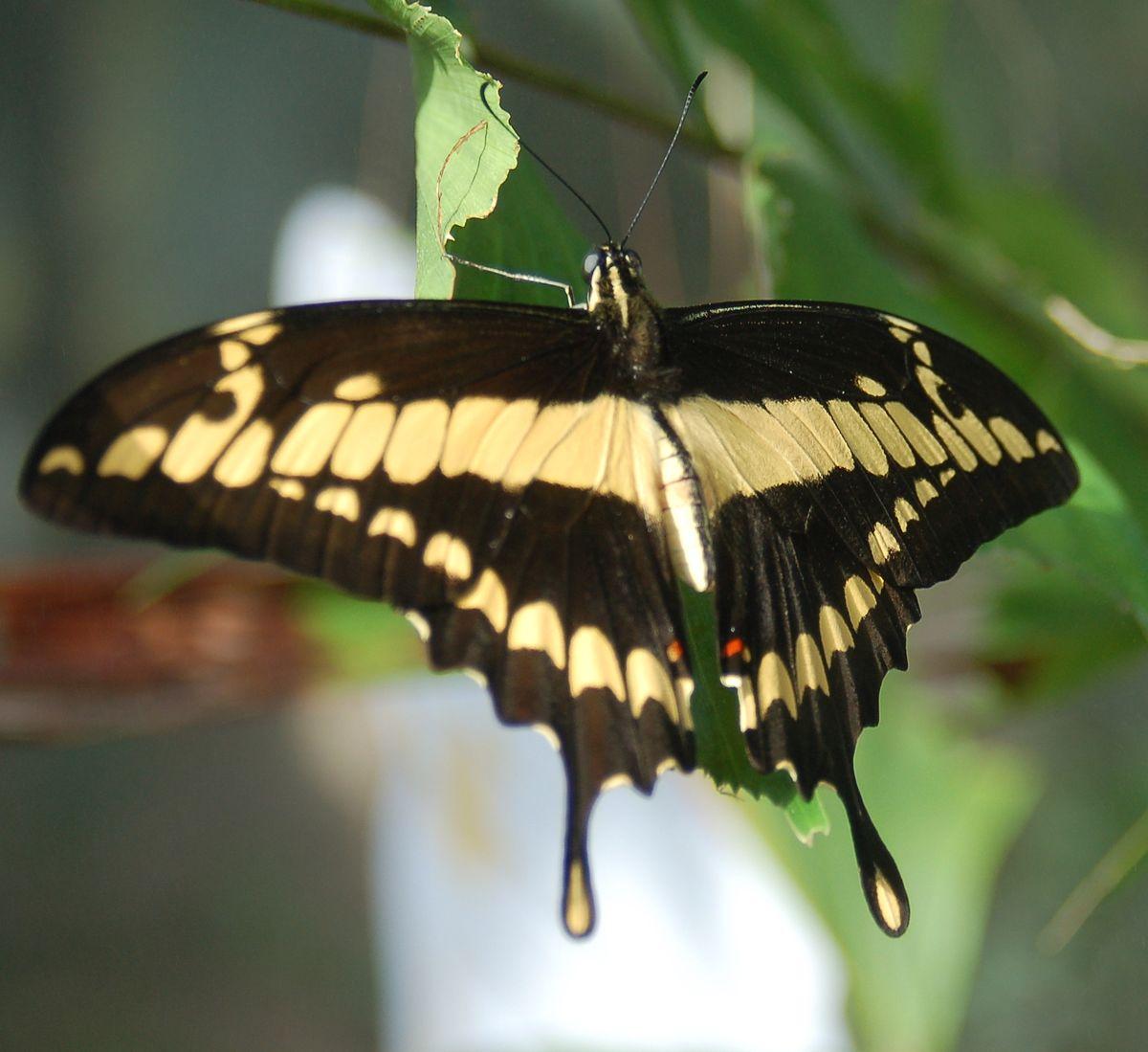 Alas de mariposa - 4 5