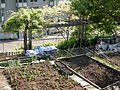 Danny Woo Community Garden 14.jpg