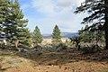 Davis Creek Park - panoramio (62).jpg