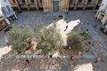 Dax-place de la cathédrale. Vue d'ensemble de la place piétonne. Le pavement en quartzite du Bénin est divisé en damiers. Les structurantes grises, en marbre d'Arudy répondent aux escaliers de la cathédrale.png