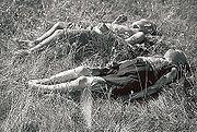 Finské děti zavražděné sovětským přepadovým oddílem v severním Laponsku (červenec 1942, Seitajärvi)