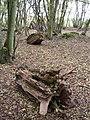 Deadwood and coppice - Hempstead wood - geograph.org.uk - 278702.jpg
