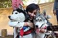 Delhi Pet Fed 2015 Image1.jpg