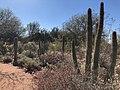 Desert Botanical Garden Phoenix.jpg
