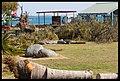 Destruction of Woody Point-06-Large (2924128576).jpg