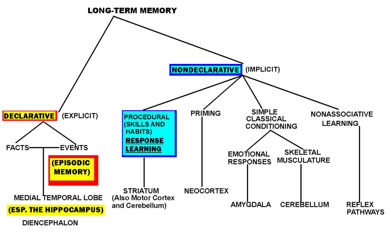 declarative memory The purpose of the present study was to assess hippocampal and prefrontal  functioning during performance of a verbal declarative memory task in subjects  with.