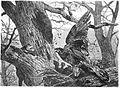 Die Gartenlaube (1876) b 363.jpg