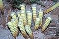 Diorama of a Carboniferous seafloor - sponges 3 (31733637378).jpg
