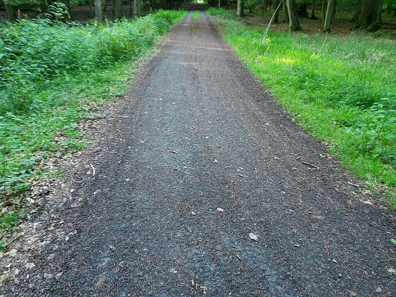 File:Dirty compacted forest track no1.jpg