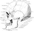 Dixon's Manual of human osteology (1912) - Fig 105.png