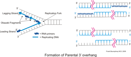 Dna parental3 overhang.png