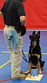 Dogs in Action - Flickr - The Central Intelligence Agency.jpg