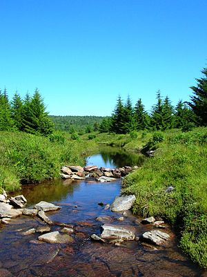 Dolly Sods Wilderness - Upper Red Creek in Dolly Sods