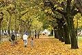 Domingo de Outono em Vila Verde - panoramio.jpg