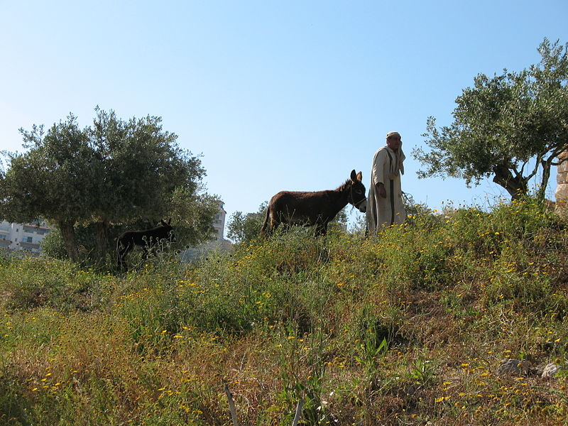 File:Donkey and Villager 0744 (508121161).jpg