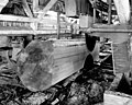 Double circular saw cutting a log in a sawmill.jpg
