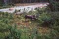 Driving down the Kenai Peninsula (50042614328).jpg