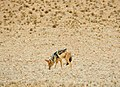 Driving through the Namib Desert (25606081617).jpg