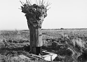 DummyTreeHill63Messines1917
