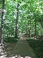 Dunn's Woods pathway southward.jpg