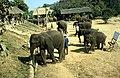 Dunst Myanmar 2005 01.jpg