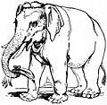 EB1911 Elephant - Fig. 1 Asiatic Elephant.jpg