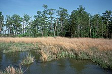 Taylors island wildlife management area wikipedia for Bill burton fishing pier state park