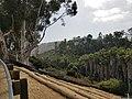 East Mira Mesa Canyon 3.jpg