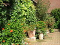 East Ruston Old Vicarage Garden5.JPG