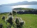 El cardo símbolo de las tierras altas de Escocia - panoramio.jpg